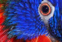Rainbow Lorikeets- so beautiful