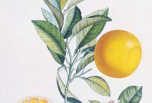 botanical prints