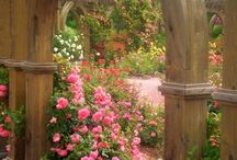 my dream garden ! / by Stephanie Green