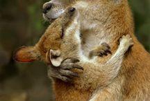 Baby animals - Marvellous marsupials / by Ryn Tomas