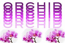 PANTONE Color of the Year: ORCHID / by Blaine Oelschlegel