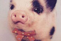 Pig ♡