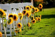 Sunflower & Daisy Weddings
