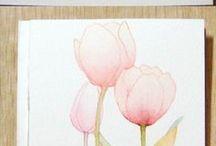 draw poppy