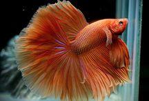 fish&aqua