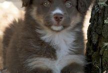 Dog list