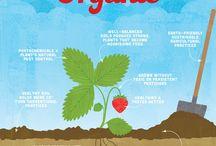Green Tulip Organic Lifestyle / Bringing inspiration to organic consumers