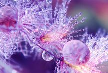Красота с капельками воды