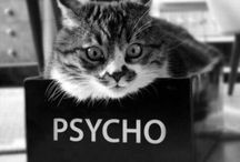 Katzen und Tierbilder
