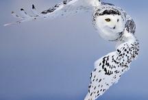 Beautiful  Birds / by Roger N Quevillon, M.Msc