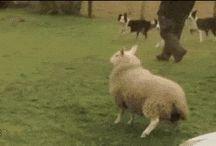 Zwierzęta humor