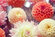 Flower Arrangements, Bouquets