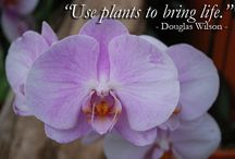Inspirational Quotes / Quotes that inspire Sheridan Nurseries to give 100% each day.