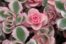 Succulents! / by April Leigh Smeraldo