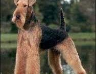 airedale terrier mexico
