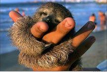 Sloths are sooo freaking cute..love