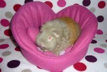 Guinea Pigs: Cozy