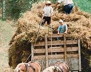 La vie des Amish