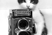 Cats with cameras