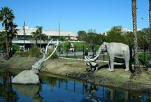 La Brea Tar Pits Los Angeles California / by Diana Wright