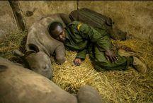 #SaveTheRhinos