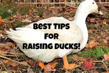 New duck info