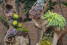 plantas y flores nat.