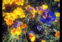 Flowers! / Hood River Oregon described through foliage and flowers...