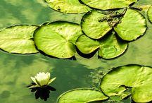Green / Vert / Fotografie