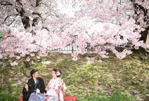 桜 Sakura at Kyoto / 京都の桜