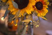 Sunflowers / by Jane baker