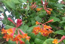 Colours in my garden - Orange
