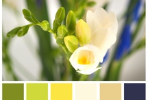 Color Outside the Lines / Color palettes that inspire our designs and entertain us during playtime.