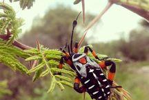 börtü böcek