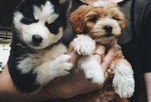 ~Dog & caT~