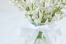 FLOWER : Convallaria / Muguet - Lily of the valley