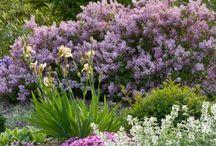 Gardens / by Lynn Pilarski
