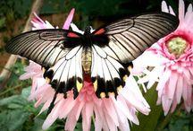 Beautiful butterflies & Moths / by Linda Wilds