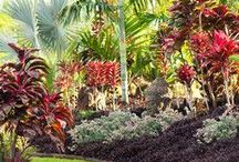 Tropical gardens and plants