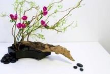 """Ikebana / Composizioni """"Ikebana"""""""