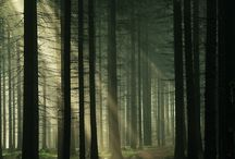 magic forests