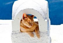Travel destinations for cat lovers