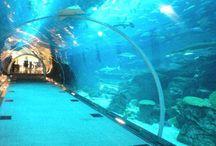 Acuarios del mundo. / Los 25 acuarios del mundo preferidos por los viajeros de TripAdvisor.