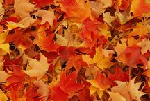 Fall in Michigan / Things to do and see in Michigan in the fall.  You can't beat our fall colors!