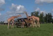 Tours / by Global Wildlife Center