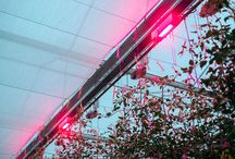 PROJECTS. / Here you can find photos of several greenhouse LED lighting projects we developed with the Oreon Grow Lights.