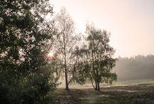 Enyhe, de lehangoló időnk lesz a héten / Enyhe, de lehangoló időnk lesz a héten  http://www.pilishirek.hu/2015/01/19/enyhe-de-lehangolo-idonk-lesz-heten/