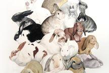 Bunny love / by Debra-Carolyn Morris Brennan