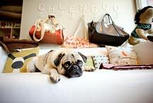 Cheengoo Pet