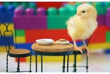 Chick chicks.... / by Jeannine Ross